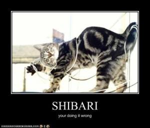 shibari cat 02